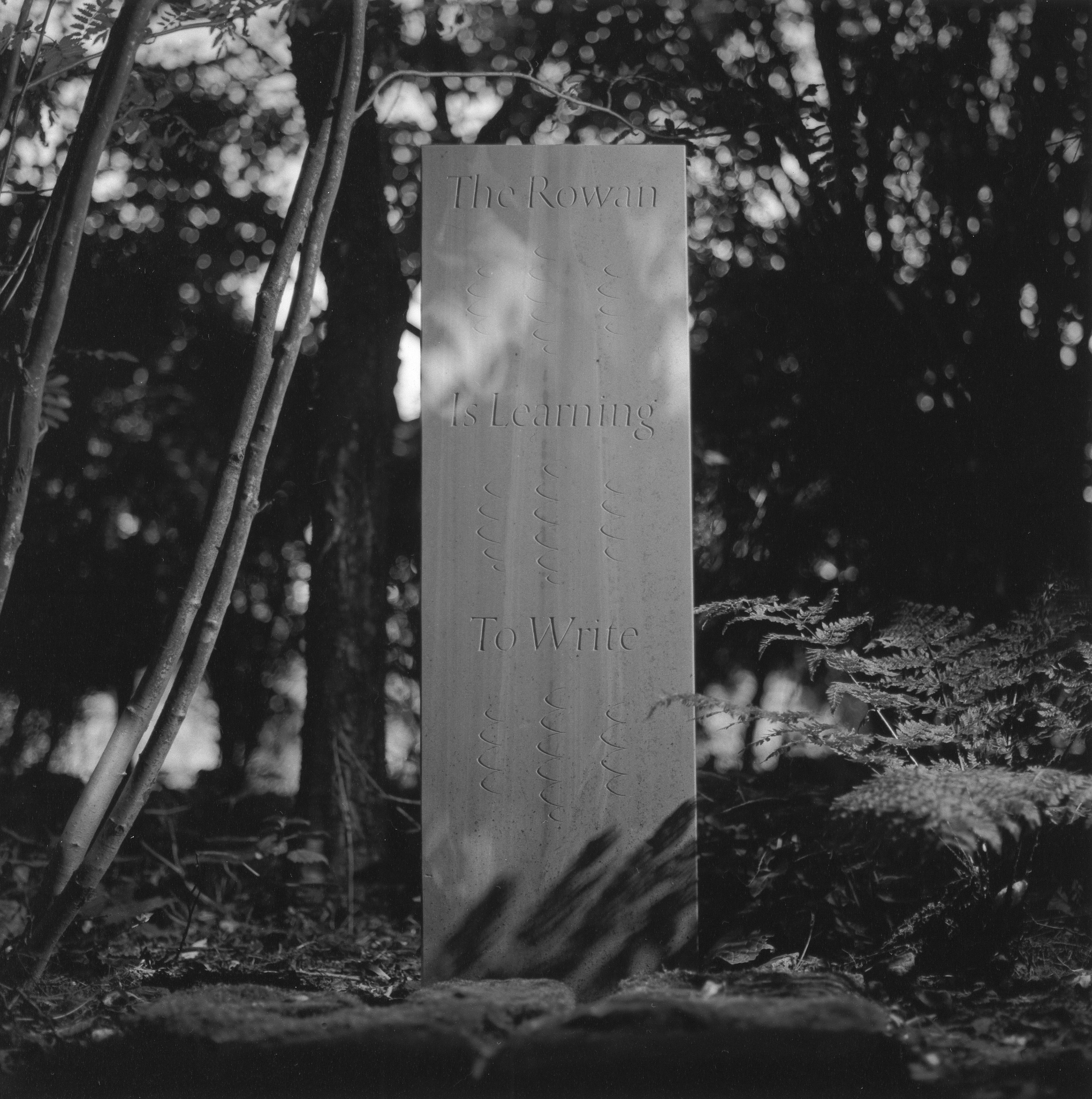 Image of The Rowan is Learning to Write (1997) by Robin Gillanders